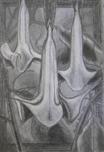 Angels Trumpet by Rachel Heu